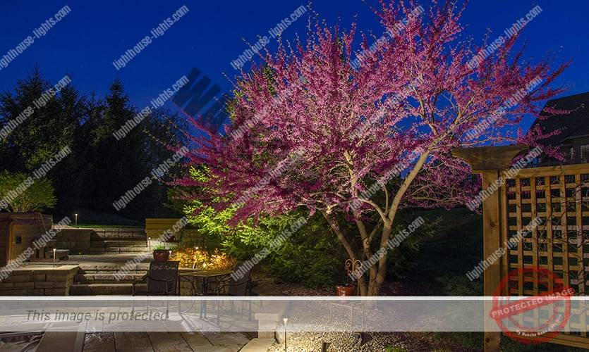 Lighted Redbud Tree by a Patio